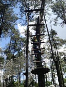 Treetop 5