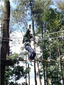 Treetop 6